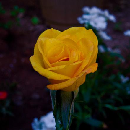 Blossom, Nikon COOLPIX S8200