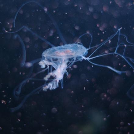 jellyfish, Pentax K-50