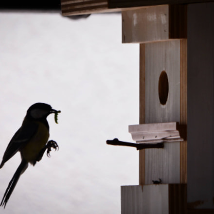 landing of the bird, Nikon D600, Sigma 150-500mm F5-6.3 DG OS APO HSM