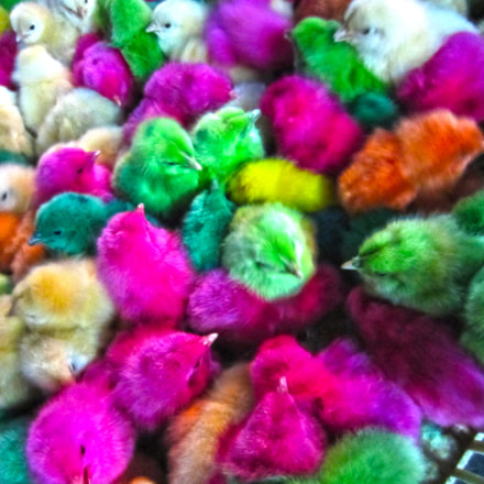 colorful little chicks ♥, Canon IXUS 220HS