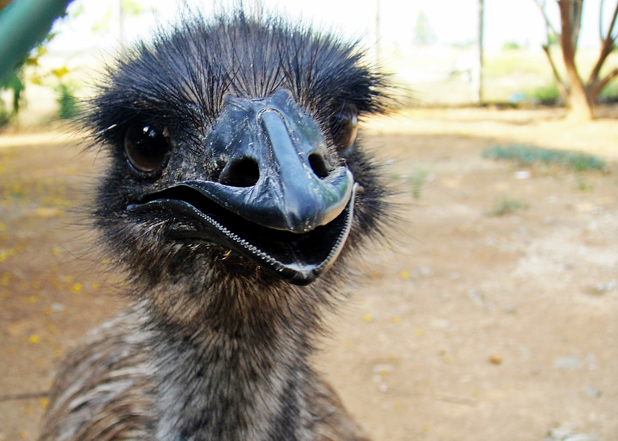 Photograph Young Emu! by Shereef Sherry on 500px