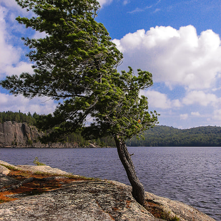 Pine on the rock, Canon POWERSHOT S2 IS