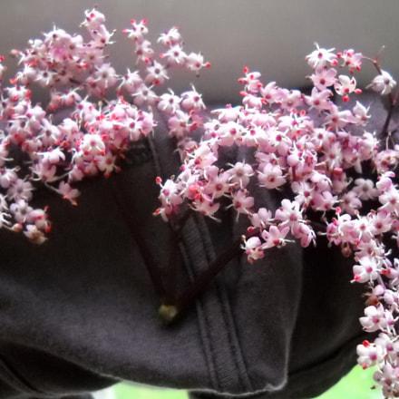 Tiny wild flowers, Nikon COOLPIX L20