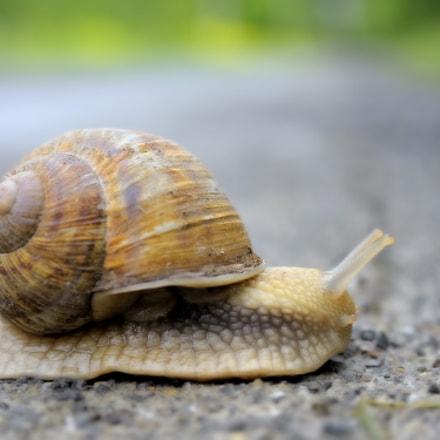Snail  7910, Nikon D700