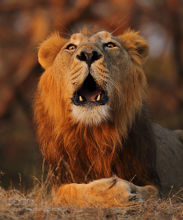 Photograph I am the King. Any Problem...? by Saurabh Desai on 500px