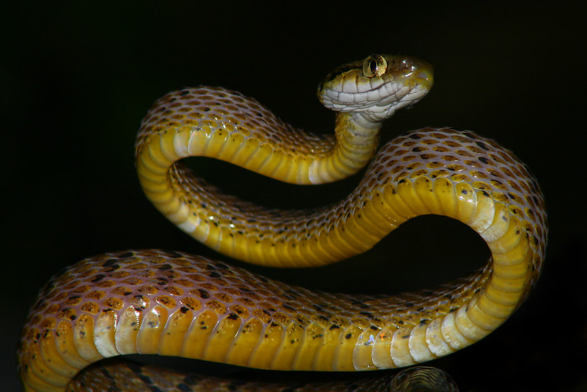 Photograph The Cat Snake Charge  by Saurabh Desai on 500px