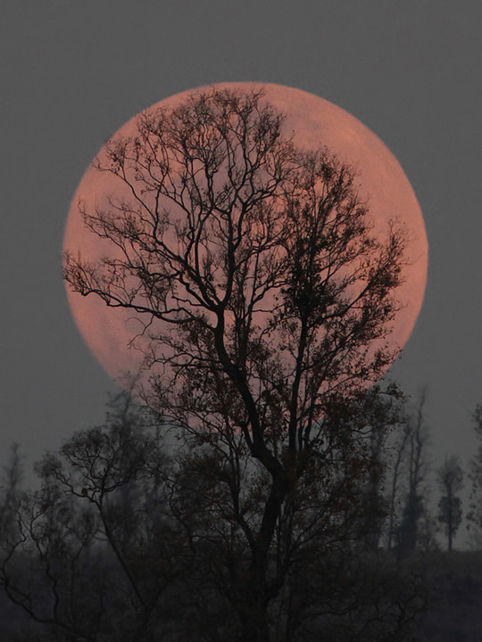 Photograph The Super Moon Rise by Saurabh Desai on 500px