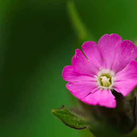 Pink beauty, Sony SLT-A77V
