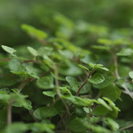 Plants, Nikon D90, Manual Lens No CPU