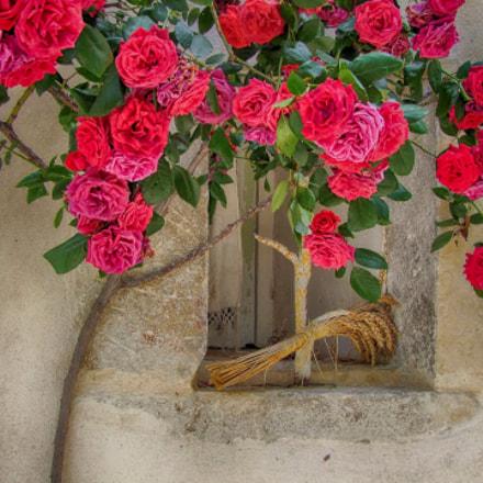 Summer roses, Fujifilm FinePix S100FS