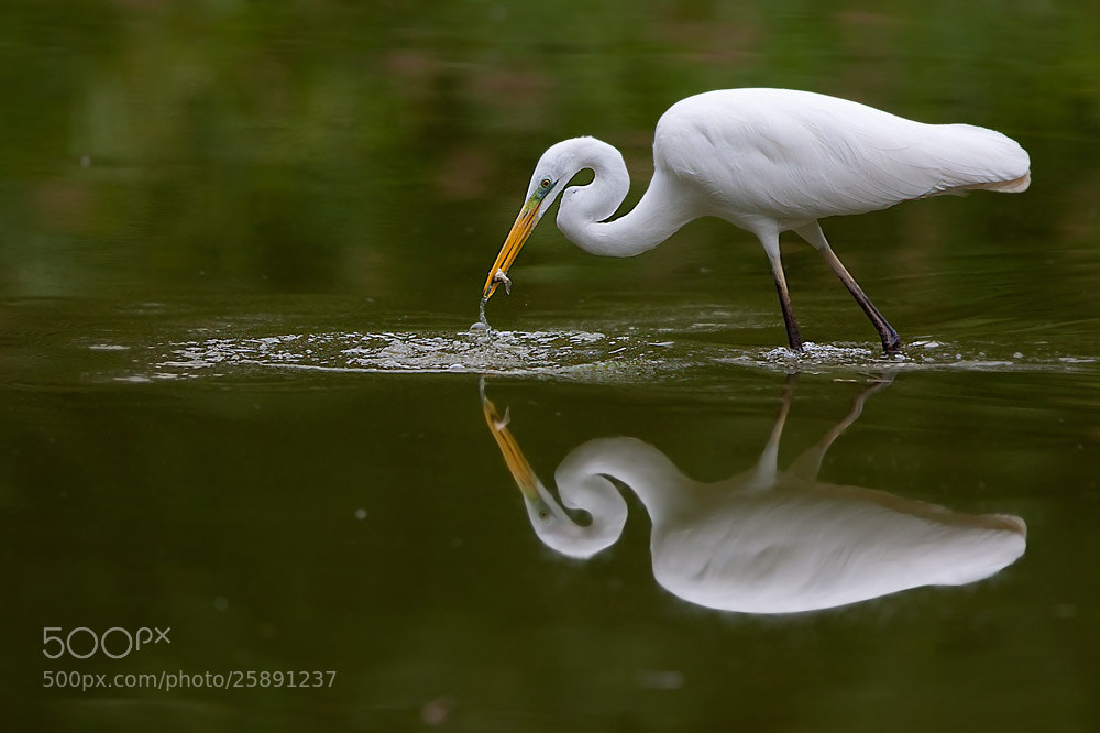 Photograph Reflex by Stefano Ronchi on 500px