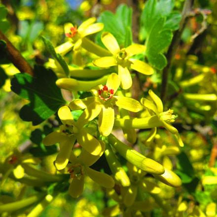 Yellow Flowers, Canon POWERSHOT SX610 HS