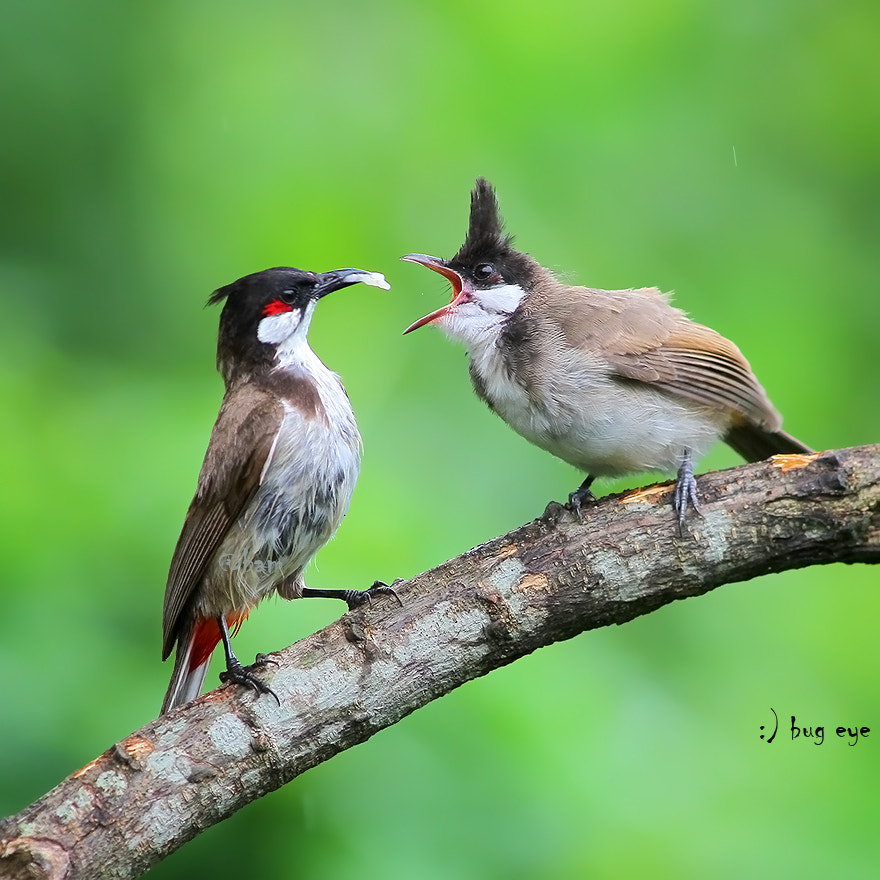 Photograph :) Happy Valentine's Day  by bug eye :) on 500px