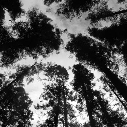 trees, Panasonic DMC-TZ18