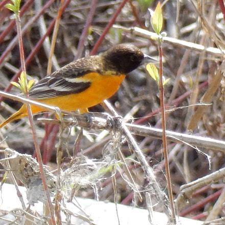 Bird, Nikon COOLPIX S9700