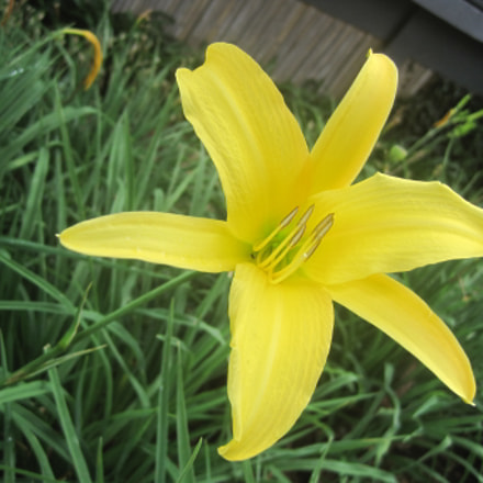 Blooming Yellow, Canon DIGITAL IXUS 95 IS