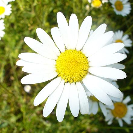 Fleur des champs, Panasonic DMC-LZ5
