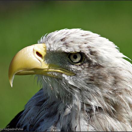 The Eagle, Pentax K-R, Tamron AF 70-300mm F4-5.6 LD Macro 1:2