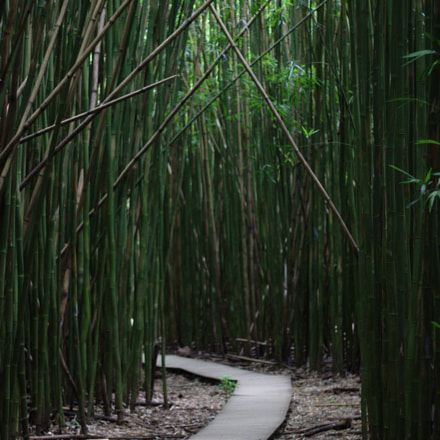 Path through bamboo forest, Canon EOS 600D, Canon EF 50mm f/1.8 II