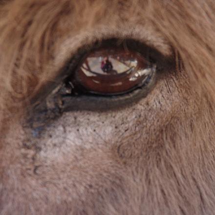 Donkey's eyes catch me, RICOH PENTAX K-70, smc PENTAX-DA 18-135mm F3.5-5.6 ED AL [IF] DC WR