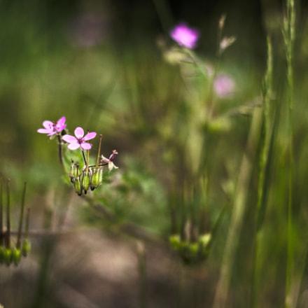 Wiesen Blicke, Canon EOS KISS X5, Canon EF 50mm f/1.8 II