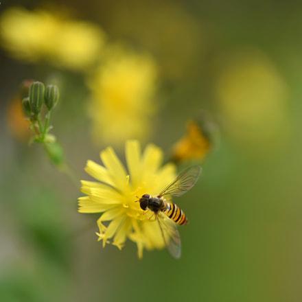 The Wild Flower's Song **, Nikon D750, AF-S Micro Nikkor 60mm f/2.8G ED