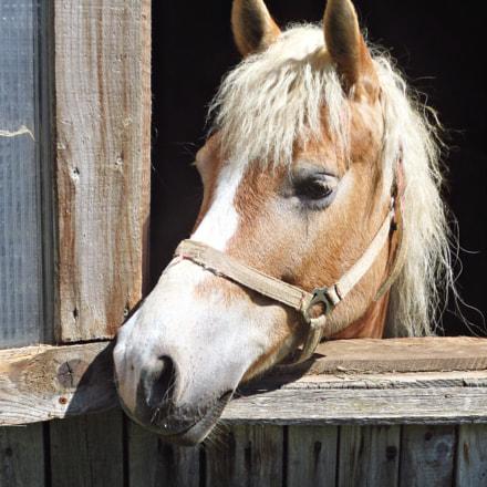 horsepet, Canon IXUS 240 HS