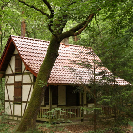 Cabin in the Forest, Canon EOS 5D, Canon EF 24-105mm f/3.5-5.6 IS STM