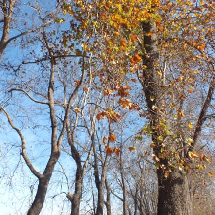 Trees, Fujifilm FinePix HS25EXR