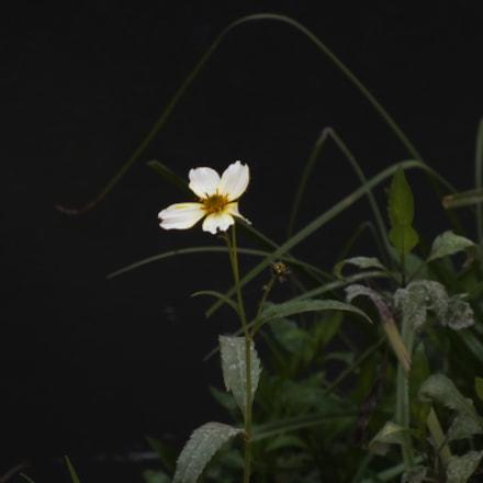 White Flower, Fujifilm FinePix HS25EXR