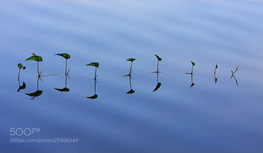 Photograph Stay Growing, Call of Life by Saurabh Desai on 500px