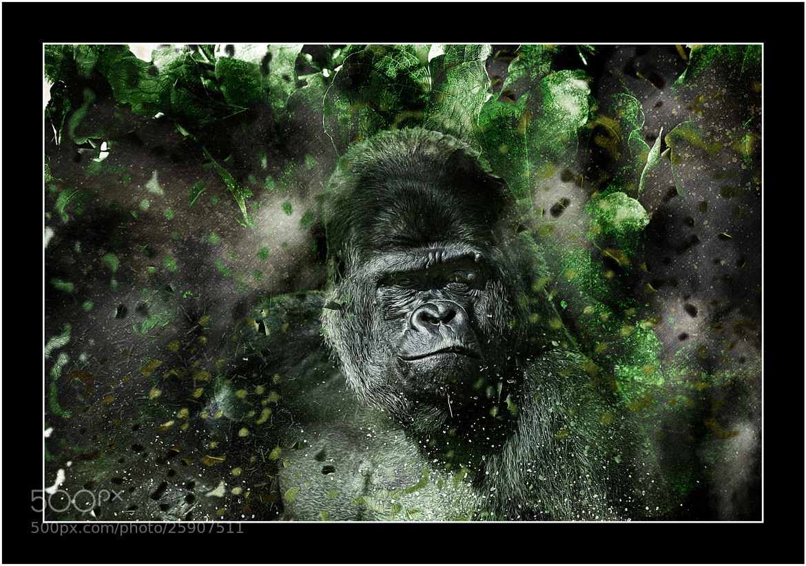 Photograph Gorrilla  by Kevin Sharpe on 500px