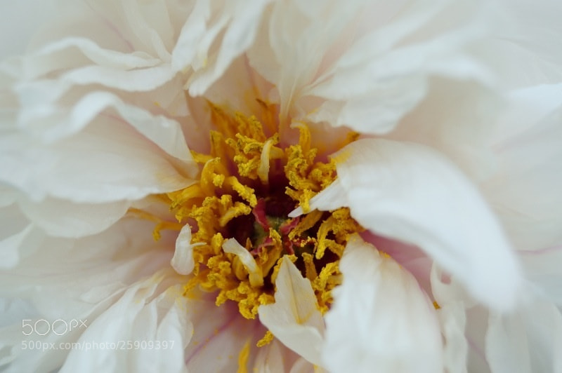 Photograph Flowers3 by Coming 163 on 500px