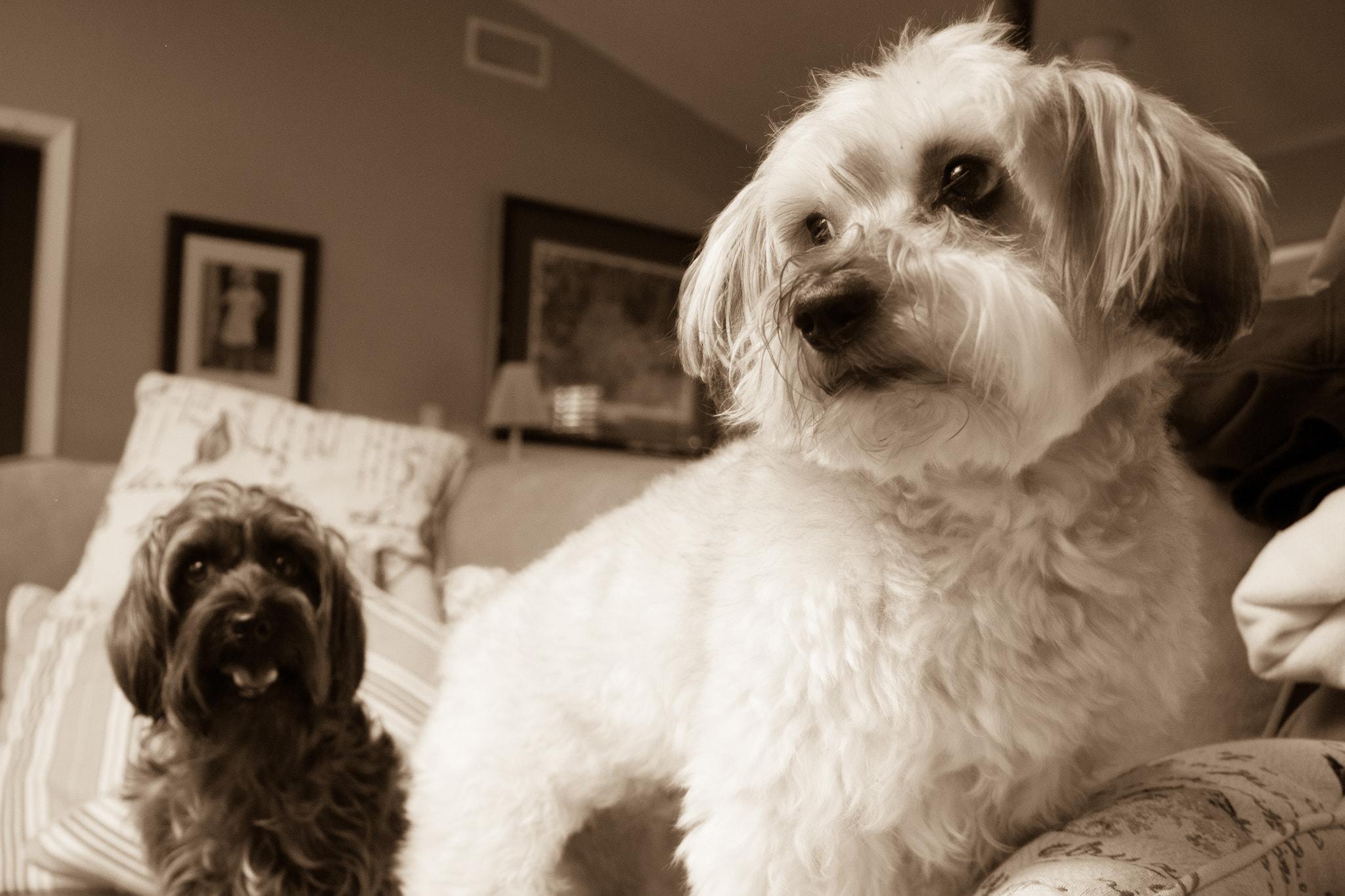 Photograph Mazy & Chloe by Tim Evans on 500px
