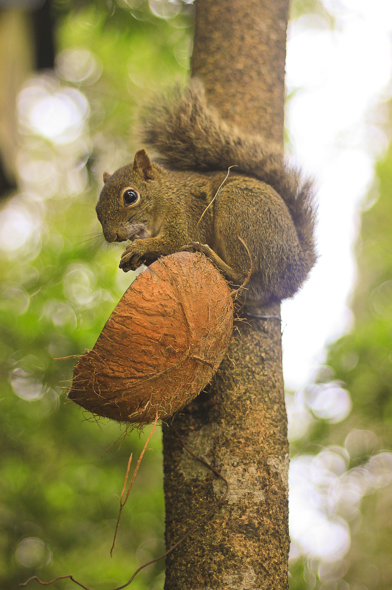 Photograph Squirrel by Davi Costa on 500px