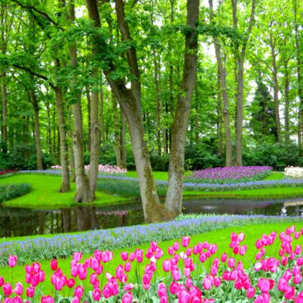 Keukenhof Garden, Nikon COOLPIX P6000
