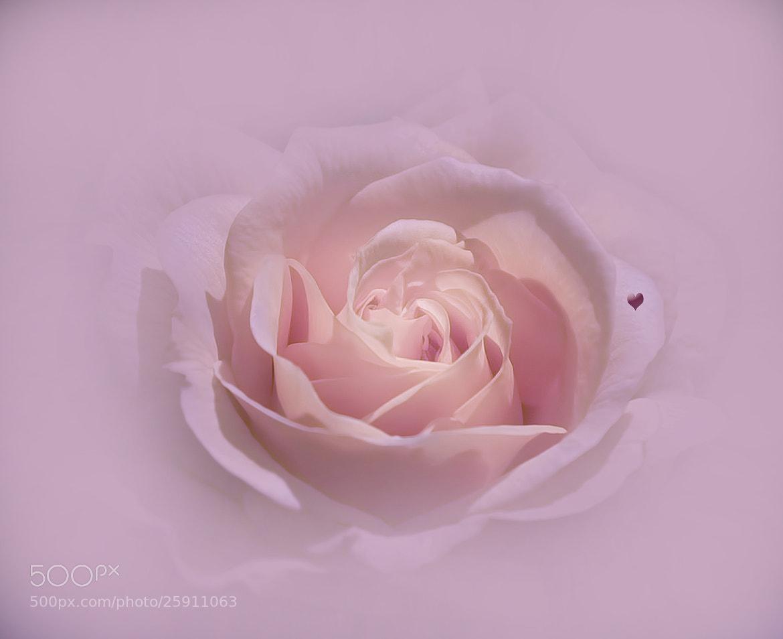 Photograph Happy Valentines Friends :) by Lauren Thibodeau on 500px