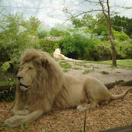 Zen lions, Sony DSC-L1