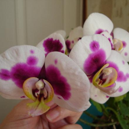 Orchid, Sony DSC-L1