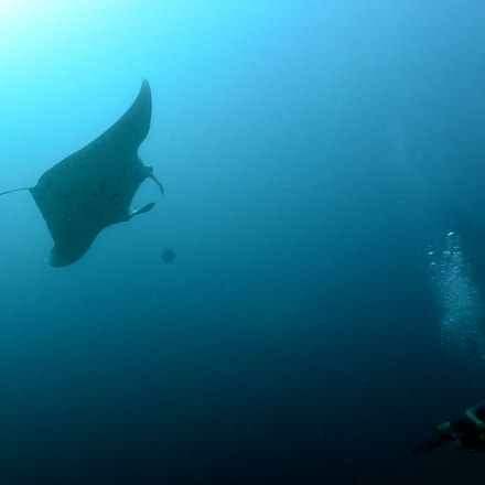 diving with mantas and, Nikon D810