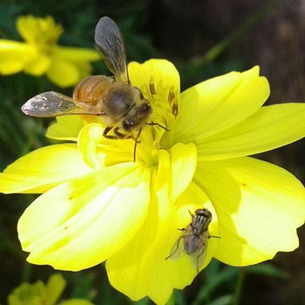 Honey test by bee, Samsung Galaxy J1 Ace