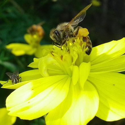 Bee, Samsung Galaxy J1 Ace