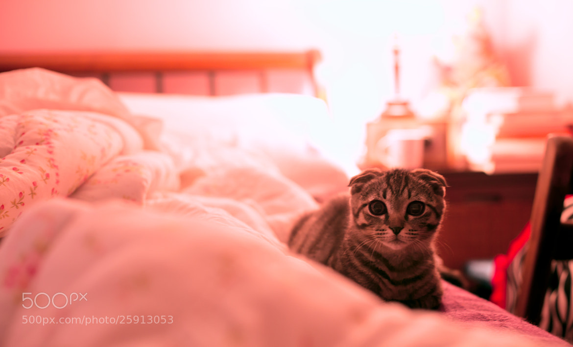Photograph What do you want? by Team B&K on 500px