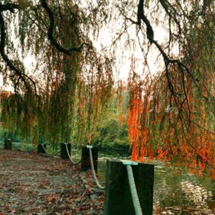autumn, Samsung Galaxy A7