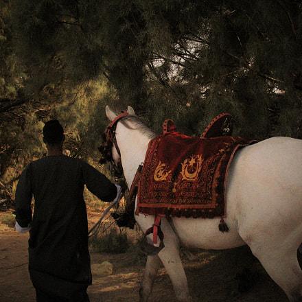 Arabian horse, Canon POWERSHOT A620