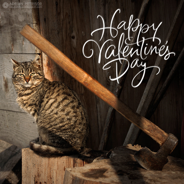 Photograph Happy Valentine's Day by Adrian Petrisor on 500px