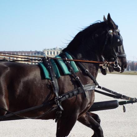 Horse, Fujifilm FinePix S9800 S9850 S9750