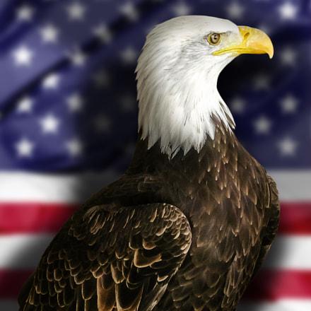 Bald Eagle with Flag, Canon DIGITAL IXUS 970 IS