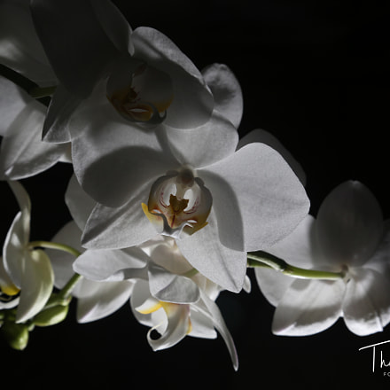 Orchidee, Canon EOS 5D MARK III, Canon EF 24-105mm f/4L IS