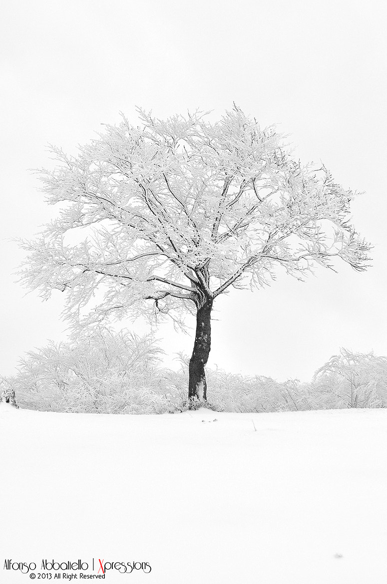 Photograph Snowly Tree by Alfonso Abbatiello on 500px